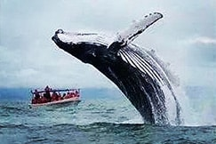whale-watching-Costa-Rica-retreat