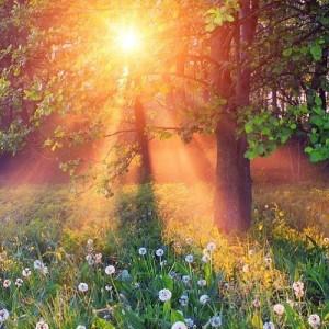 awakening peace