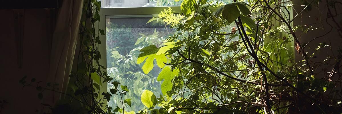 peterborough-living-yoga-plants